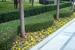 Landscaping Cincinnati OH