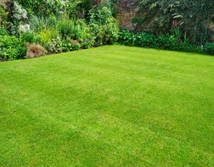 Lawn Care in Blue Ash OH