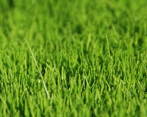 Lawn Care in Liberty Township OH