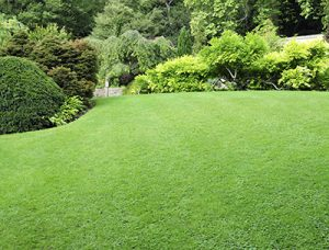 Lawn Care in Loveland OH